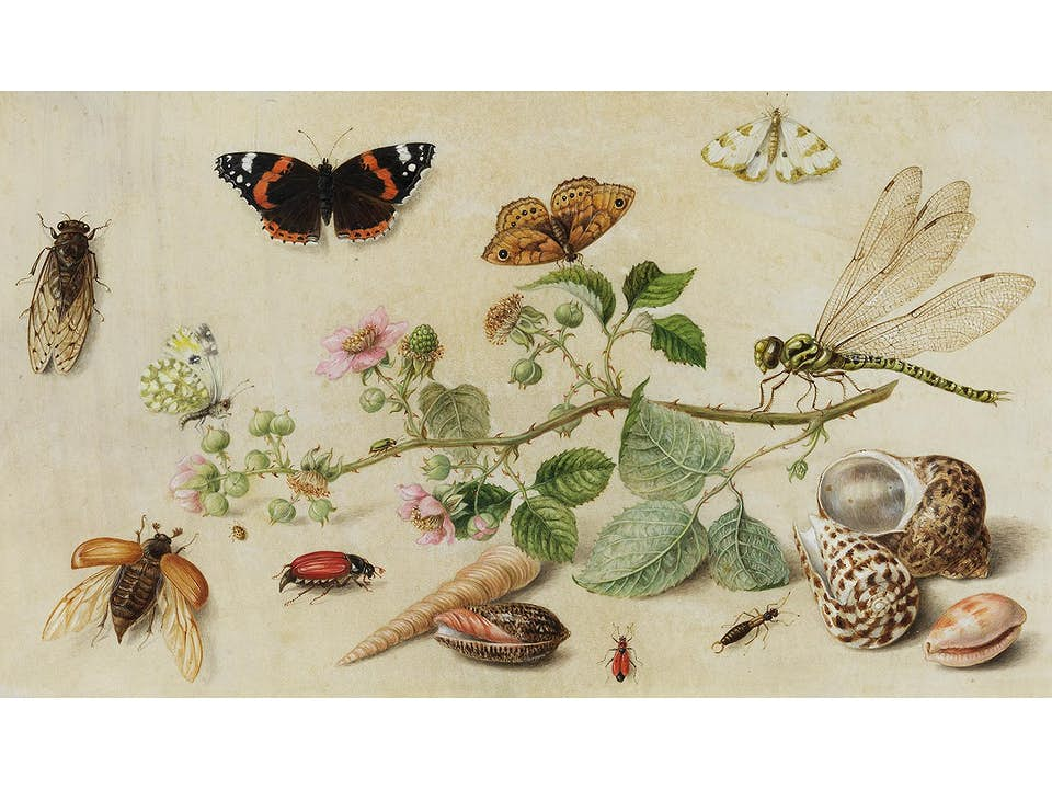 Jan van Kessel, 1626 Antwerpen – 1679 ebenda, zug.