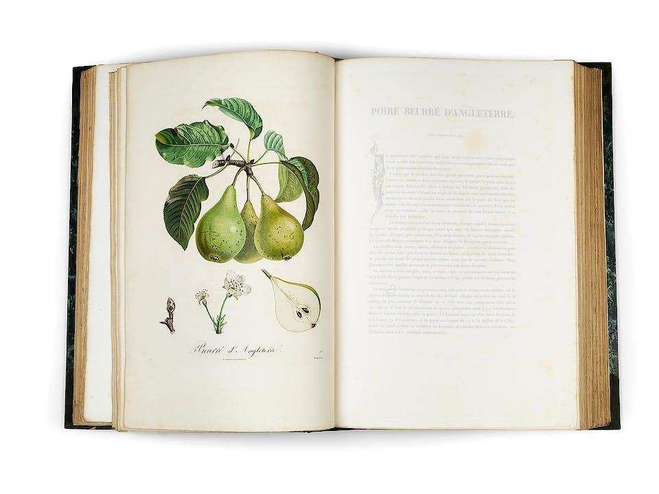 POITEAU, Pierre-Antoine. Pomologie francaise. Recueil des plus beaux fruits cultivés en France.
